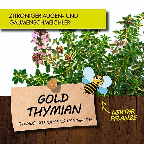 Goldthymian