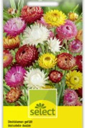 Helichrysum Strohblume gefüllte Mischung