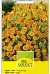 Tagetes 'Zwerg Orange' Sammetblume nieder