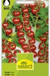 Bio VK Cherry-Tomate 'Lylia'