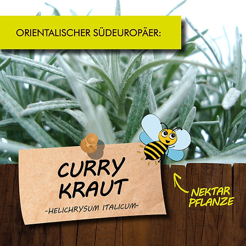Currykraut
