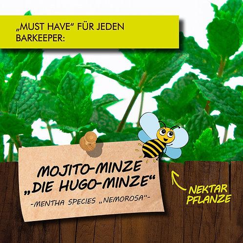 "Mojito-Minze   ""Die Hugo Minze"""