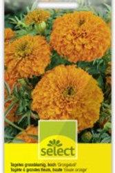 Tagetes 'Orangeball' Sammetblume hoch gef.