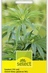 Cannabis sativa Faserhanf (THC arm)