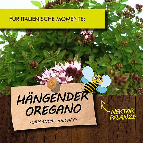 Hängender Oregano