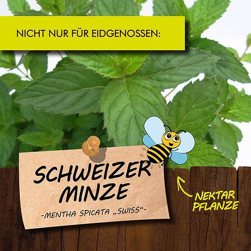 Schweizer Minze
