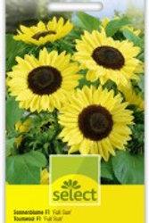 Helianthus 'Full Sun F1' Sonnenblume