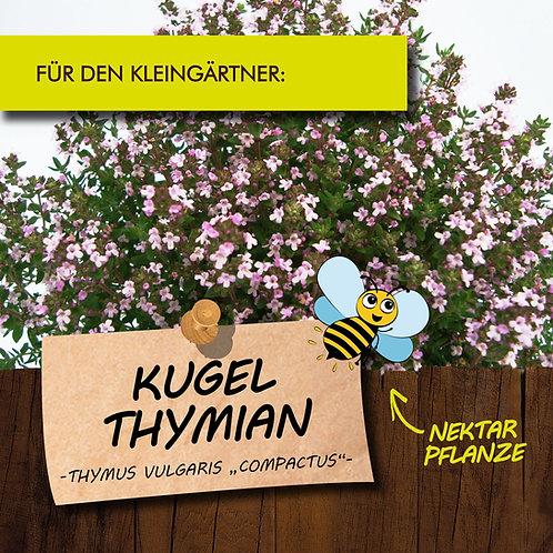 Kugelthymian