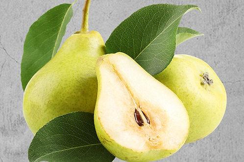 Mini Birnenbaum