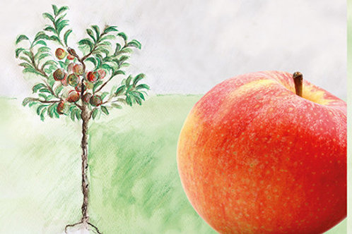 Mein kleiner Apfelbaum Galiwa
