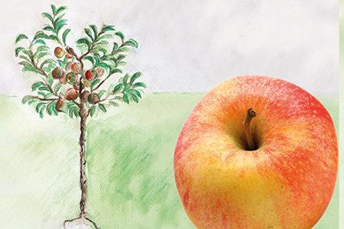 Mein kleiner Apfelbaum Topaz