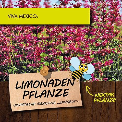Limonadenpflanze