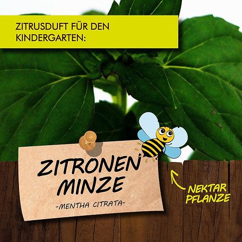 Zitronenminze