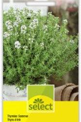 Thymus vulgaris Thymian Sommer einjährig