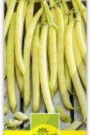 Buschbohne gelb