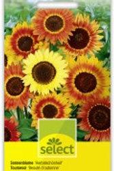 Helianthus 'Herbstschönheit' Sonnenblume