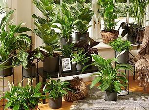 Pflanzen_3.jpg