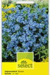 Myosotis 'Blausee' Vergissmeinnicht'blau