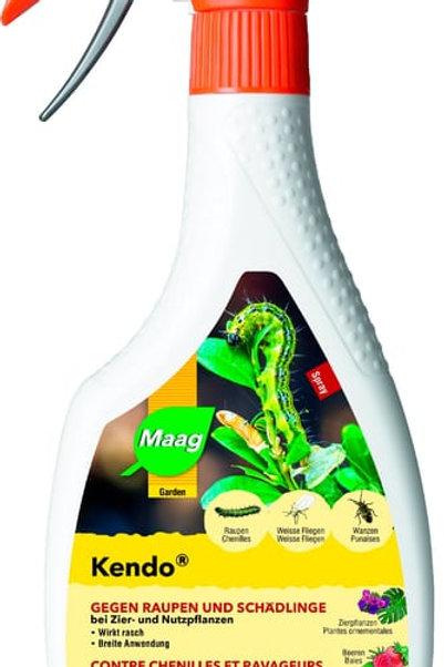 Kendo Spray
