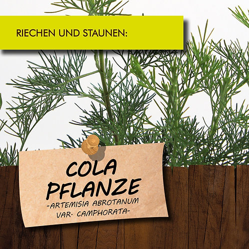 Colapflanze