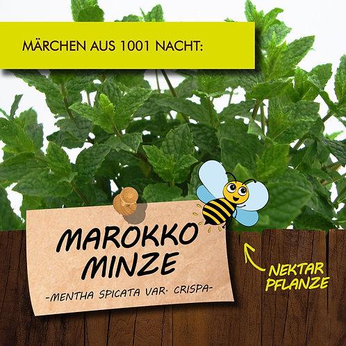 Marokko Minze