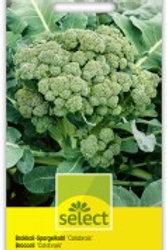 Broccoli-Spargelkohl 'Calabrais' früh
