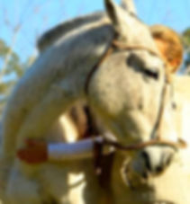 ana y caballo copia.jpg