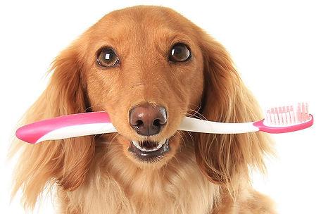 tanden-poetsen-hond.jpg