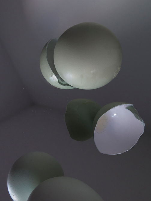 egg shells.jpg