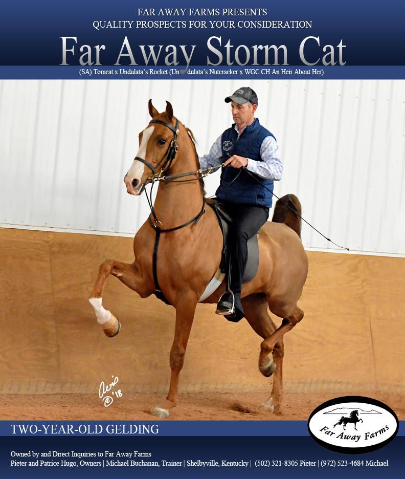 Far-Away-Farms_Storm-Cat_Blast_March_201