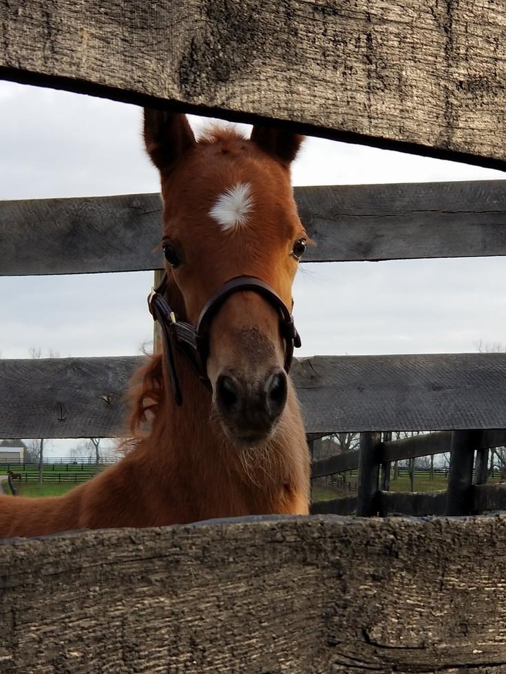 ElectricMoon-foal.jpg