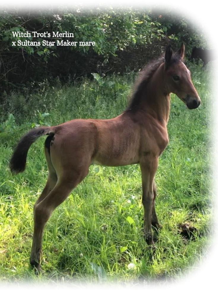 WTM x Sultan Star Maker foal.jpg