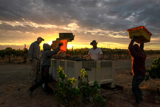 Harvest at sunrise