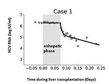 Modeling hepatitis C virus kinetics during liver transplantation highlights the role of the liver in virus clearance