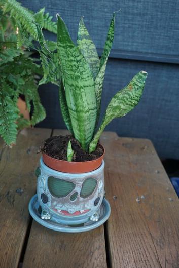 Bulba-planter