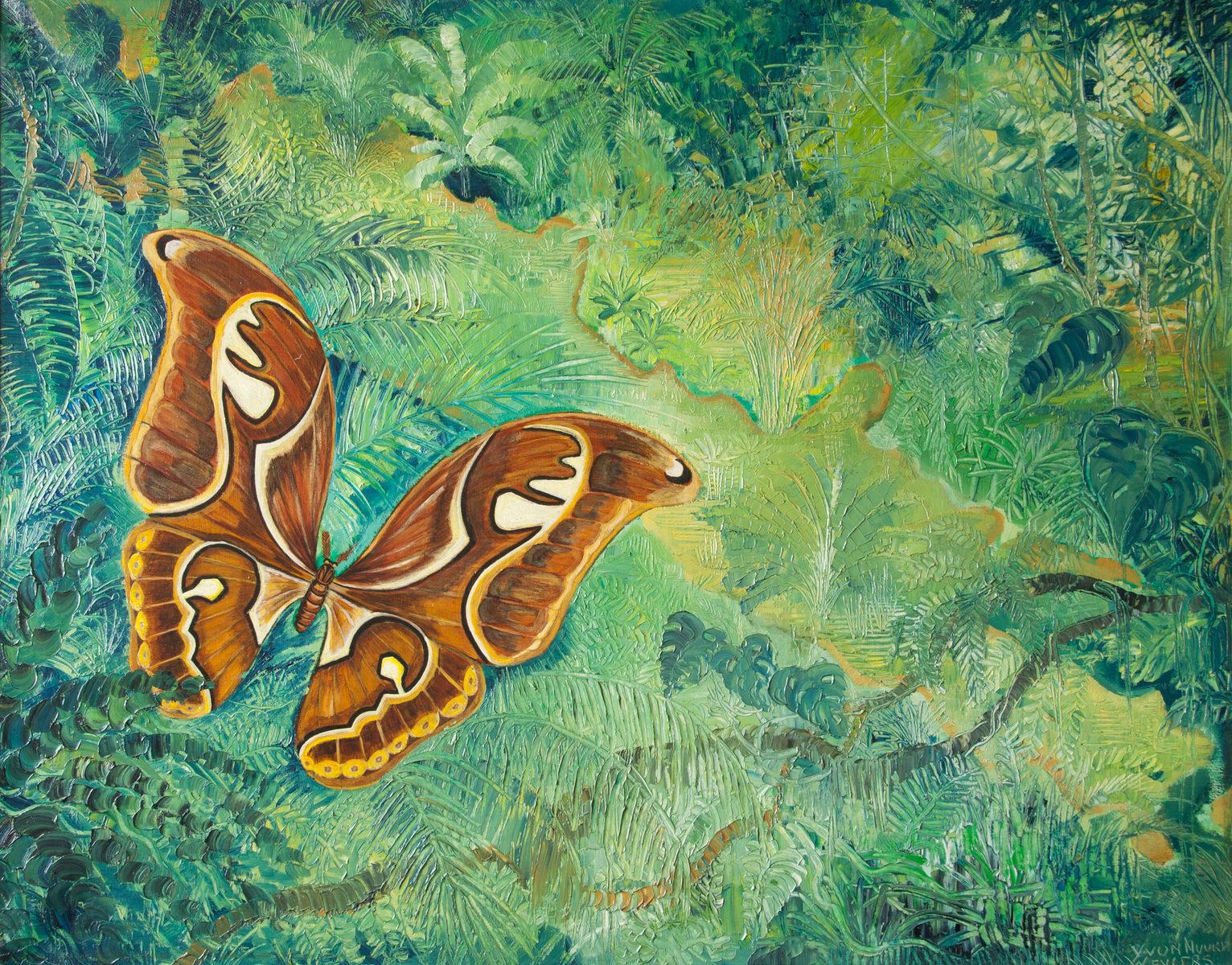 Weerzien Atlasvlinder