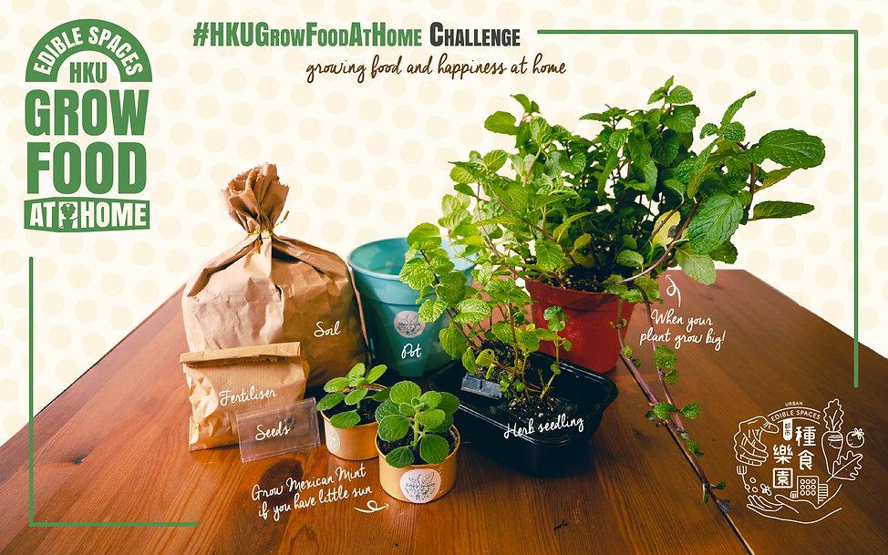 HKU Grow Food at Home poster