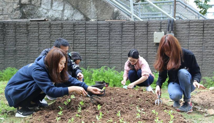 Participants transplanting seedlings