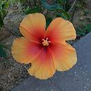 Photo of a flower chosen by Lap (HKU Rooftop Farm teammate)