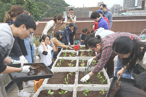 HKU Rooftop Farm sustainable farming workshop. participants transplanting seedlings to planters.