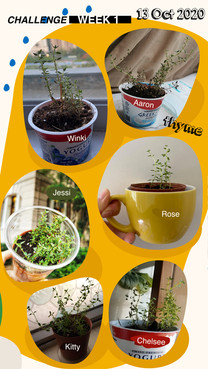 Growathome-week1-02.jpg