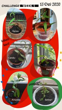 Growathome-week1-01.jpg