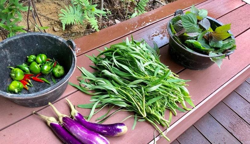 Harvest sharing
