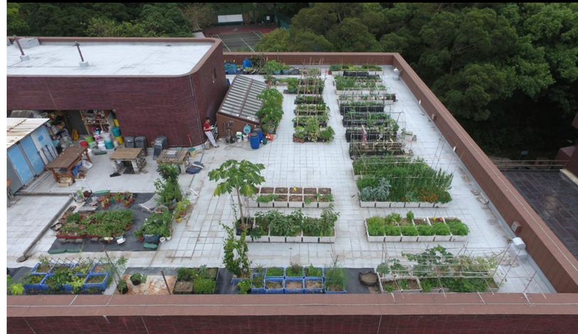 Drone View of the Rooftop Farm