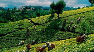 Ceylon Tee.jpg