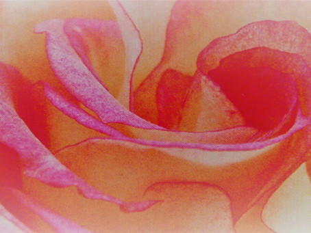 Rosenpflegelinie