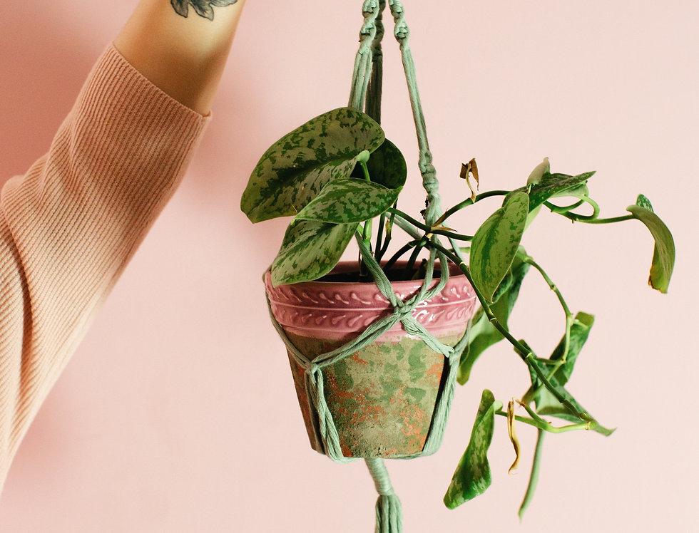 Macrame plant holder - Sage