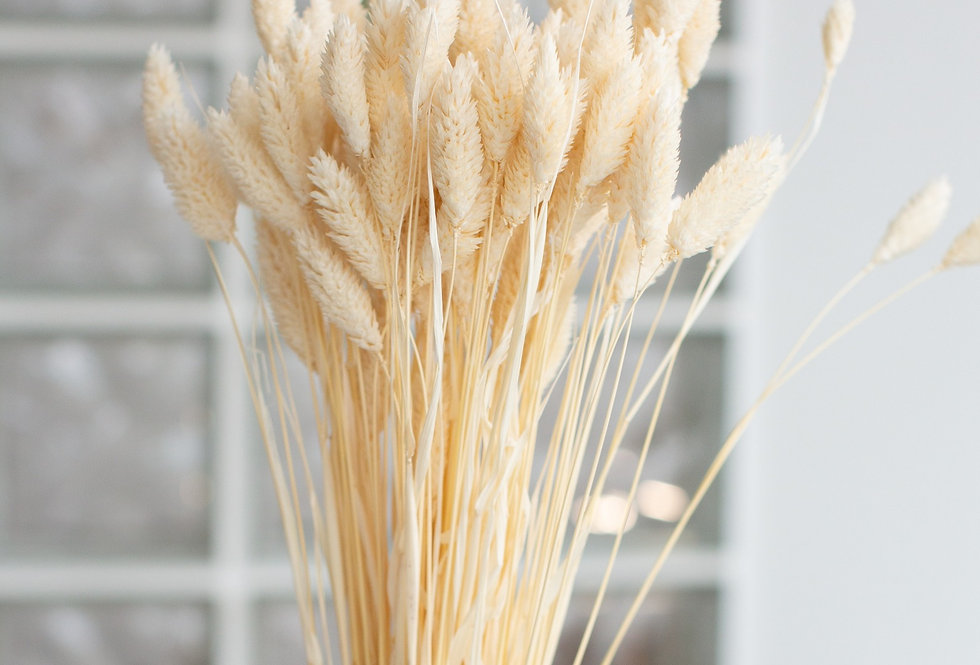 20 x Dried bleached phalaris stems