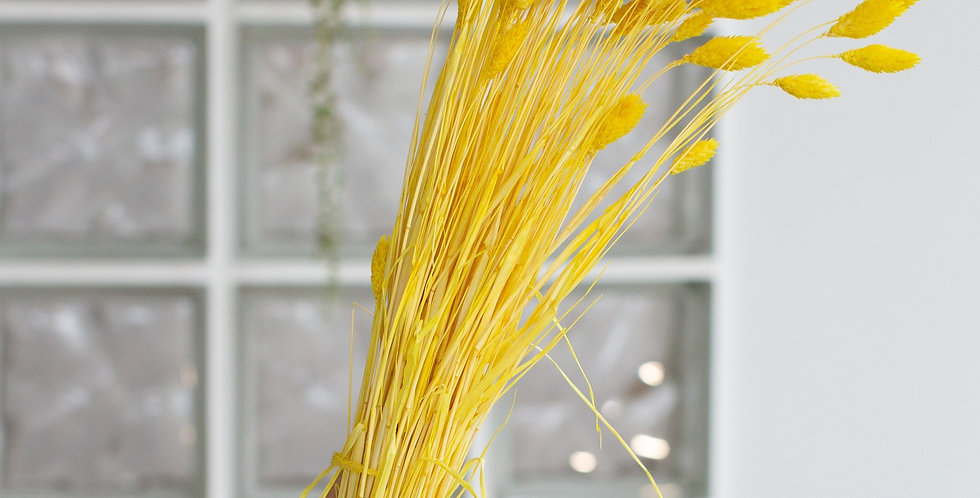 20 x Dried yellow phalaris stems