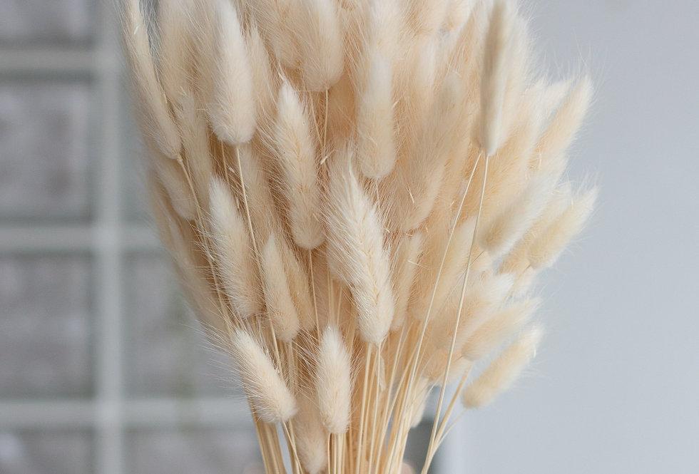 20 x Dried bleached 'bunny tail' lagurus stems